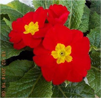 FOTKA - před květinářstvím-6