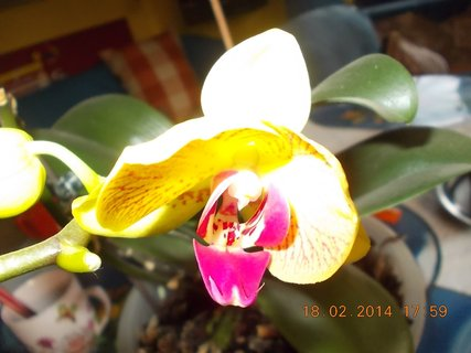 FOTKA - z jiného úhlu květ
