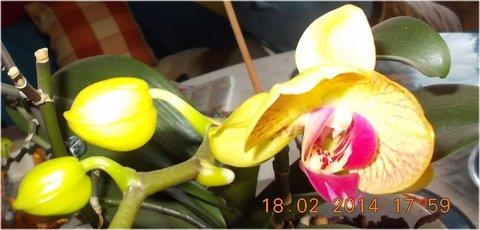 FOTKA - zatím jenom jeden květ