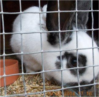FOTKA - v králíkárně