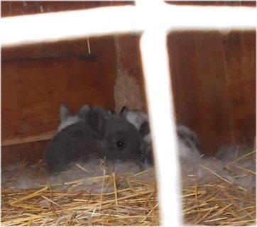 FOTKA - králičí miminka