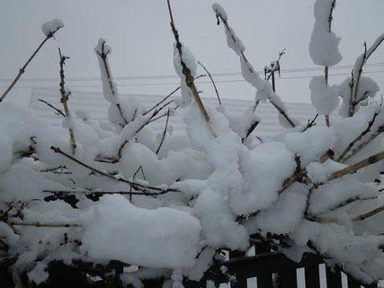 FOTKA - zbytek zimi
