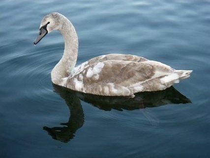 FOTKA - vodní plaváček