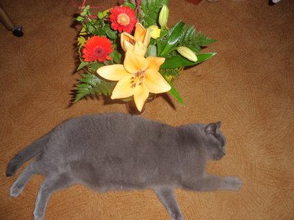 FOTKA - Mazlík a květinky