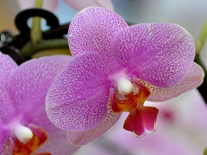 FOTKA - Výstava orchidejí