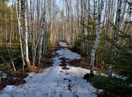 FOTKA - Cestou necestou  na řašeliniště