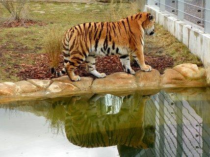 FOTKA - Zrcadlení ze Zoo