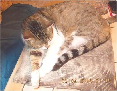 FOTKA - jj, na polštářku já ráda spím