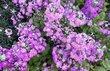 hezké květinky