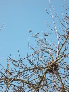FOTKA - hnízdo na jabloni