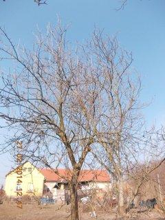 FOTKA - holá jabloň a ořech