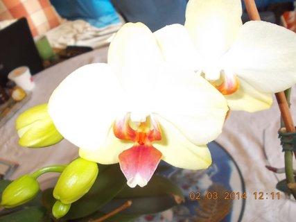 FOTKA - další květy na orchidejích-3