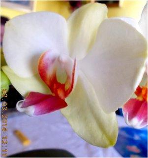 FOTKA - další květy na orchidejích-4