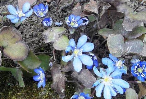 FOTKA - jatern�ky v�era na zahrad�.