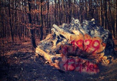 FOTKA -  I stromy mluví