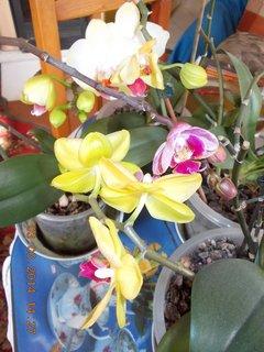 FOTKA - moc květů nemám, ale i tyto mi dělají radost