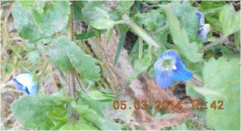 FOTKA - modrý kvíteček