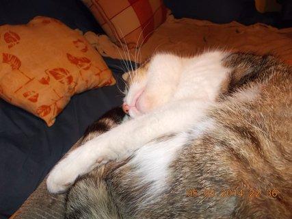 FOTKA - umím si pohovět při spaní