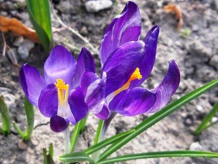 FOTKA - jaro začíná .