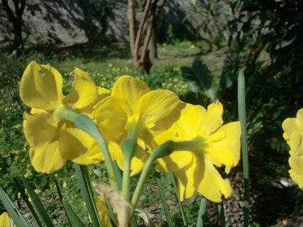 FOTKA - tri kvety z jednoho stonku