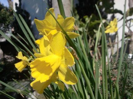 FOTKA - jaro je tady!