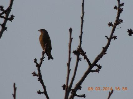 FOTKA - Na třešni 8.3. 2014