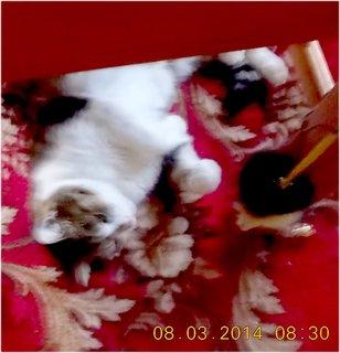 FOTKA - hraju si s myškou, přivázali mi jí na židli