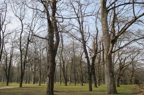 FOTKA - Jarní  Stromovka