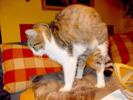 FOTKA - kočičí hřbet