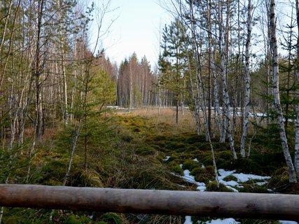 FOTKA - Pannenská šumavská příroda