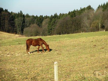 FOTKA - na pastvě dnes ráno