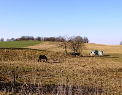 FOTKA - dneska ráno na pastvě
