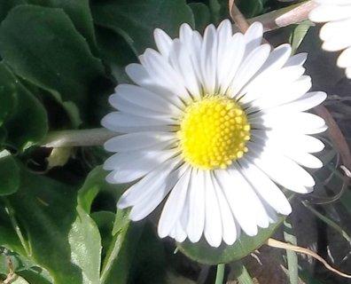 FOTKA - bílá kráska.