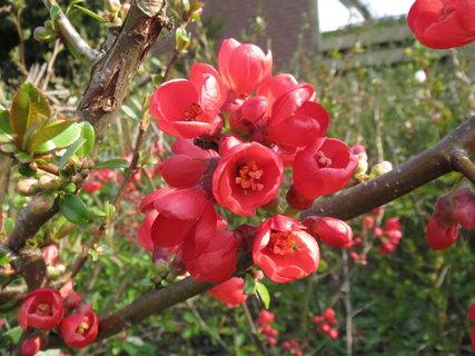 FOTKA - cervene kvety