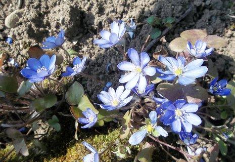 FOTKA - jaterníky kvetou ..