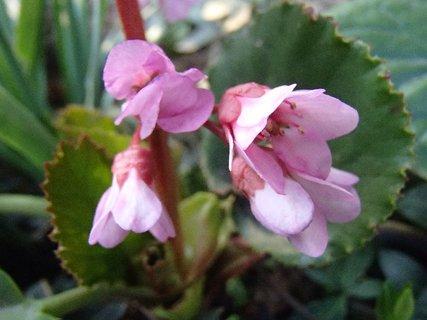 FOTKA - začínajú kvitnúť