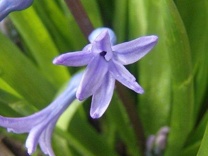 FOTKA - fialový kvietok