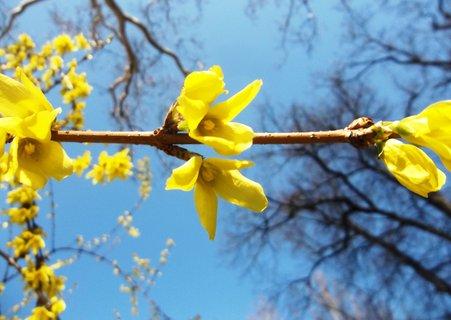 FOTKA - Letos už máme jaro