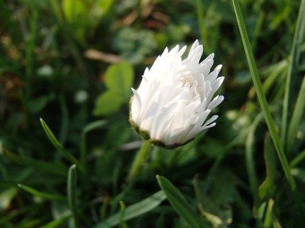 FOTKA - onedlho rozkvitne