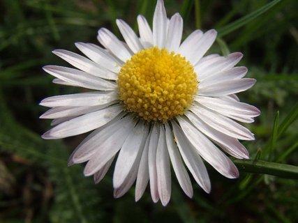 FOTKA - akosi má spustené lupene