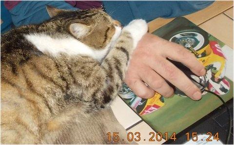 FOTKA - obě packy hrají s myší