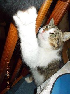 FOTKA -  ta myška je moje, chtnu jí?