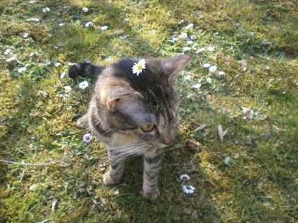 FOTKA - Kočička od kamarádky 1