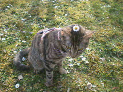FOTKA - Kočička od kamarádky 3