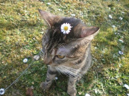 FOTKA - Kočička od kamarádky 4