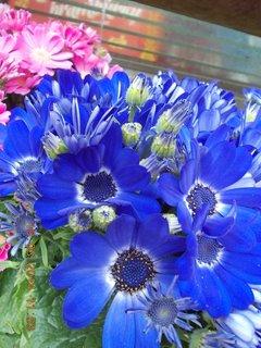 FOTKA - modré s tmavším středem jarní kvítí-7