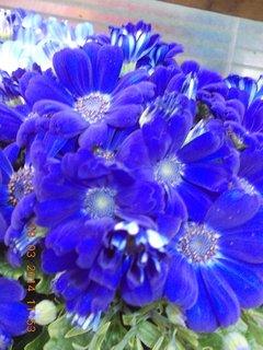 FOTKA - modré jarní kvítí-10