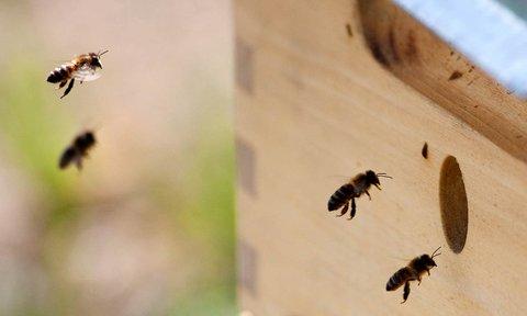 FOTKA - včelky dělnice  -  detail