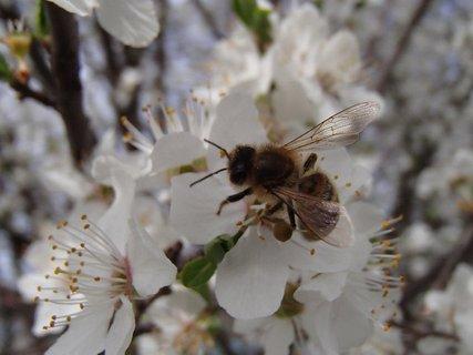 FOTKA - včielky lietajú