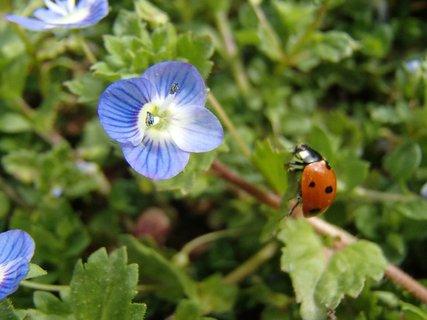 FOTKA - chcem sa dostať ku kvetu